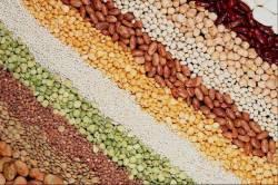 семена в Казахстане